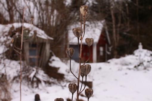 vinterkapsel