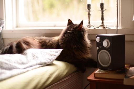 katt i hus