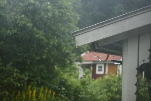 regndag